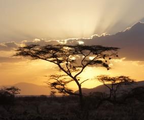 Africa_Kenya_Landscape-Sunet_Libby-York-Stauder