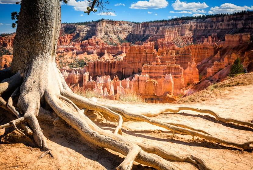 Utah_Bryce-Canyon-National-Park_tree-foreground_iStock_000027700008XXXLarge