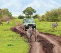 Africa_Safari-Vehicle-with-Zebras-iStock_000011866660XXLarge