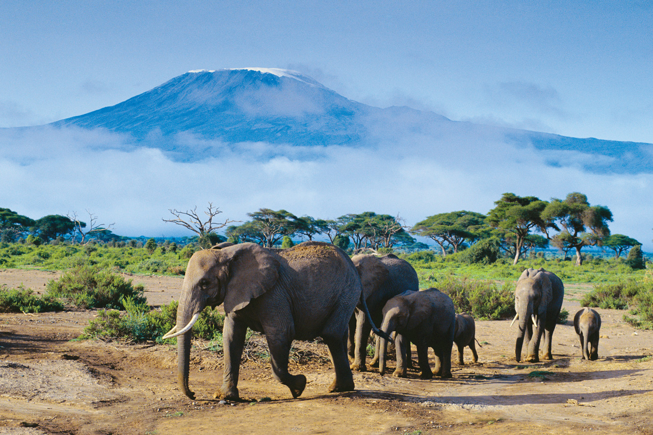 Kenya_Amboseli-National-Park_Elephants_MountKilimanjaro_GlowImages_42-16482343_RF_abcrx