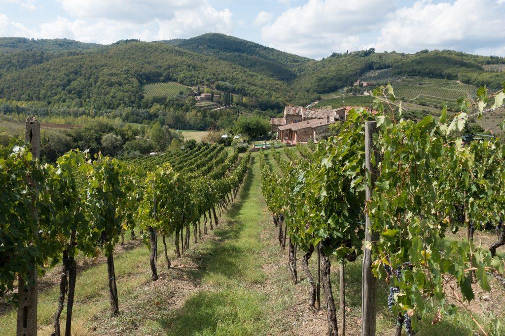 winegrowing-972870_1920