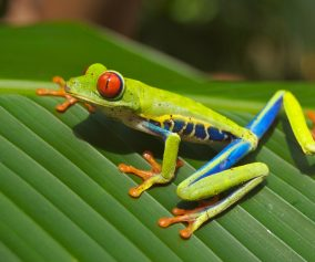 tree-frog-69813_1920